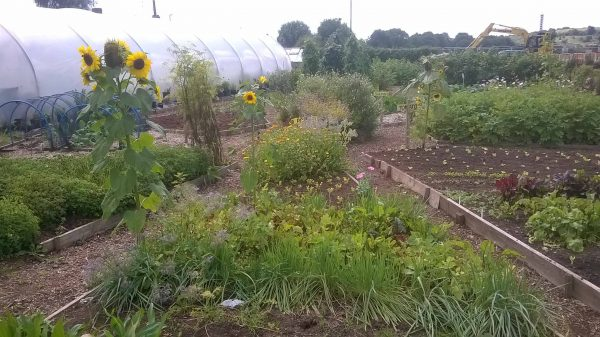 feed bristol allotment plot
